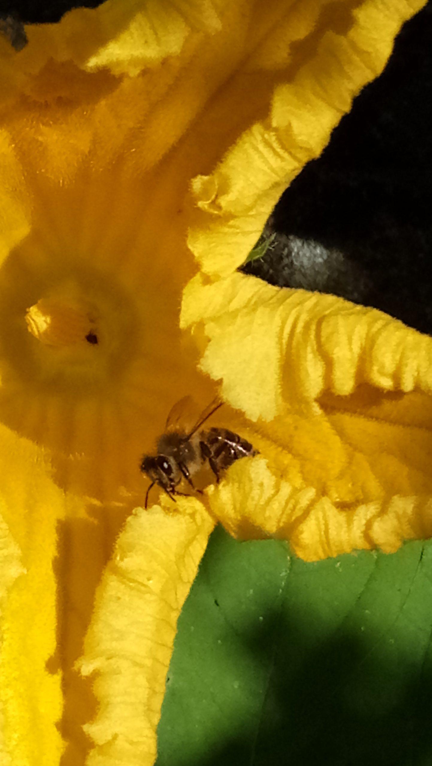Biene - Michaela Höhle